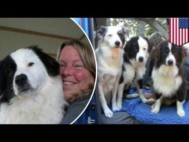 余命宣告を受けた女性 残った時間を愛犬たちの家族探しに