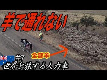 【過酷】旅してたら200匹の羊に囲まれて鬼ピンチ〜浅草の人力車がオーストラリア縦断の旅に挑戦〜【豪州#7】