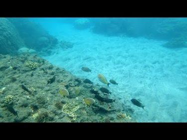 【旅エイター】オセアニアの旅・ソロモン『ドルフィンビュー・ビーチ』 ソロモン諸島・ガダルカナル島
