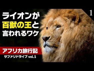 【リアルライオンキング】〇〇のシーンも激写!百獣の王の生き様を大公開【アフリカ旅行記 Vol.1】